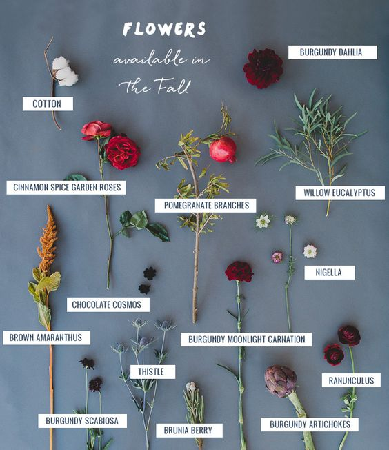 fiori_fall